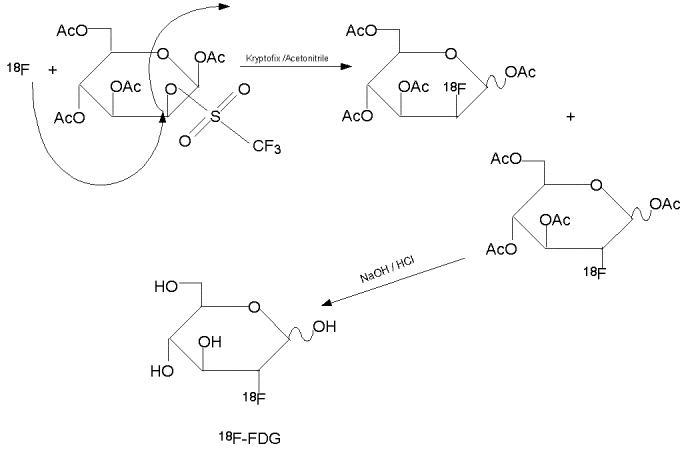 مکانیسم واکنش تولید ملکولFDG